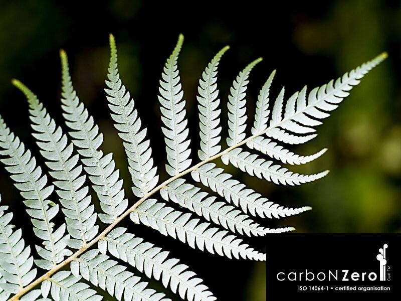 Fern Carbonzero