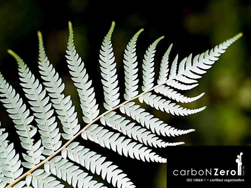 Fern Carbonzero